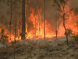 How to help those affected by Australian wildfires